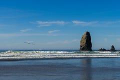 Seemöwen über dem Ozean in Richtung zu den vertikalen Felsen, die heraus im Kanonen-Strand stehen, Oregon, USA stockfotos