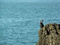 Seemöwen über Felsen im Meer lizenzfreie stockfotos