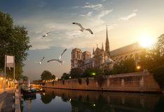 Seemöwen über Notre Dame Lizenzfreie Stockfotos