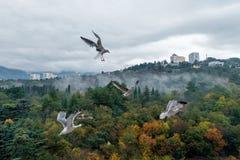 Seemöwen über Park Stockfotografie
