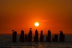 Seemöwen auf altem Pier am Sonnenuntergang Lizenzfreie Stockfotos