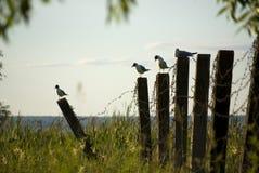 Seemöwen auf barbwire Zaun stockfotos