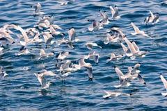 Seemöwen auf bhe Meer Lizenzfreie Stockfotografie