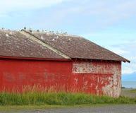 Seemöwen auf dem Dach Lizenzfreie Stockfotos