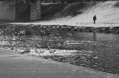 Seemöwen auf dem Fluss und einige Leute auf der anderen Seite Lizenzfreie Stockfotos
