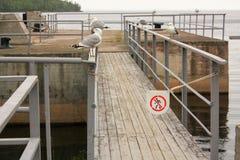 Seemöwen auf dem Pier Lizenzfreies Stockfoto