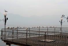 Seemöwen auf dem See Como stockbilder