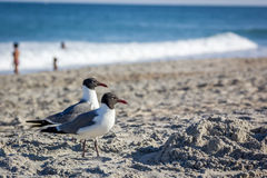 Seemöwen auf dem Strand stockbild