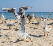Seemöwen auf dem Strand an einem sonnigen Tag des Sommers lizenzfreie stockfotos