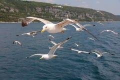 Seemöwen auf dem Strand gegen den Himmel und Meereswellen, Seemöwen über dem Meer Lizenzfreie Stockfotografie