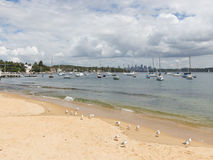 Seemöwen auf dem Strand in Sydney Stockfotografie