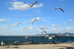 Seemöwen auf der Küste in Buyukada-Insel das Prinz Island ` s lizenzfreies stockbild
