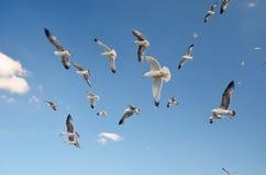 Seemöwen auf der Küste in Buyukada-Insel das Prinz Island ` s stockbilder