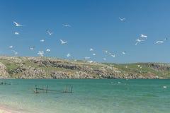 Seemöwen auf der Küste des Asowsches Meers Lizenzfreies Stockfoto