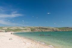 Seemöwen auf der Küste des Asowsches Meers Stockfotos
