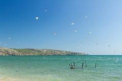 Seemöwen auf der Küste des Asowsches Meers Stockbilder