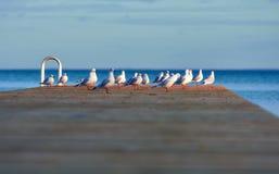 Seemöwen auf Pier Lizenzfreies Stockbild