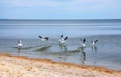 Seemöwen auf Seeküste Stockfotos