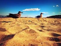 Seemöwen auf Strand Lizenzfreie Stockbilder