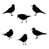 Seemöwen in den verschiedenen Haltungen Stockfotografie