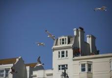 Seemöwen in der Luft gegen blaue Himmel und weiße Gebäude Stockfotografie