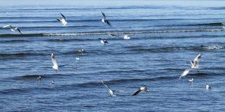 Seemöwen, die über das Meer fliegen Stockfoto