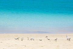Seemöwen, die auf dem Sand bleiben Stockbilder