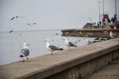 Seemöwen, die auf dem Seeufer stehen und in den Himmel fliegen Stockbilder