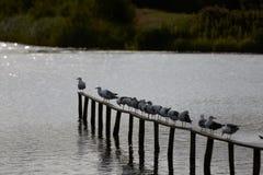 Seemöwen, die auf dem Zaun sitzen stockfoto