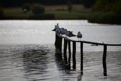Seemöwen, die auf dem Zaun sitzen lizenzfreie stockfotografie