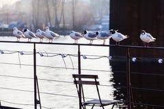 Seemöwen, die auf Geländer des Schiffs sich entspannen Lizenzfreies Stockbild