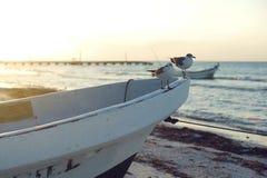Seemöwen, die auf kleinem Boot stillstehen lizenzfreies stockfoto