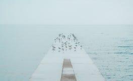 Seemöwen, die auf konkretes Dock in Meer sich scharen Lizenzfreies Stockfoto