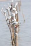 Seemöwen, die auf Polen stehen Lizenzfreies Stockfoto
