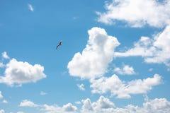 Seemöwen, die in bewölkten Himmel fliegen Stockbilder