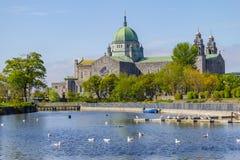 Seemöwen, die in Corrib-Fluss und in Galway-Kathedrale schwimmen lizenzfreie stockfotografie