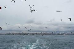 Seemöwen, die in den Himmel über dem Meer fliegen lizenzfreie stockbilder