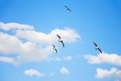Seemöwen, die in den Himmel fliegen Stockbild