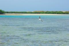 Seemöwen, die durch die Seeseite mit dem Hintergrund des Ozeans und des blauen Himmels fliegen und fischen Stockbilder