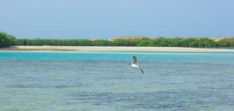 Seemöwen, die durch die Seeseite mit dem Hintergrund des Ozeans und des blauen Himmels fliegen und fischen Lizenzfreies Stockfoto