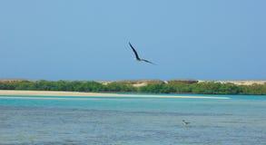 Seemöwen, die durch die Seeseite mit dem Hintergrund des Ozeans und des blauen Himmels fliegen und fischen Stockfotografie