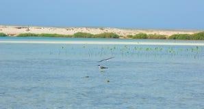 Seemöwen, die durch die Seeseite mit dem Hintergrund des Ozeans und des blauen Himmels fliegen und fischen Stockfotos