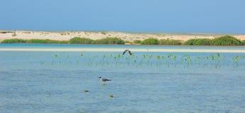 Seemöwen, die durch die Seeseite mit dem Hintergrund des Ozeans und des blauen Himmels fliegen und fischen Stockbild