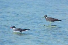 Seemöwen, die durch die Seeseite mit dem Hintergrund des Ozeans und des blauen Himmels fliegen und fischen Lizenzfreie Stockfotos