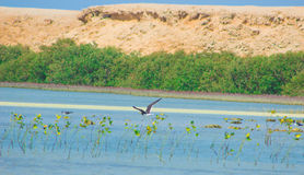 Seemöwen, die durch die Seeseite mit dem Hintergrund des Ozeans und des blauen Himmels fliegen und fischen Lizenzfreie Stockfotografie