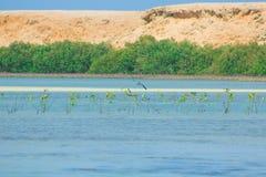 Seemöwen, die durch die Seeseite mit dem Hintergrund des Ozeans und des blauen Himmels fliegen und fischen Lizenzfreies Stockbild