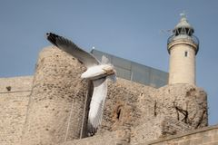 Seemöwen, die durch Leuchtturm, Castro Urdiales fliegen lizenzfreie stockfotos