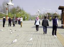 Seemöwen, die durch Touristen fliegen Lizenzfreies Stockbild