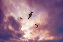 Seemöwen, die in einen Sonnenunterganghimmel fliegen Stockfotografie
