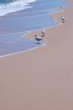 Seemöwen, die leichte Wellen am Strand genießen Lizenzfreies Stockfoto